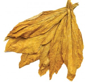 Duhan, Nicotiana spp.