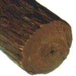 Drvo guaiac, Bulnesia sarmienti