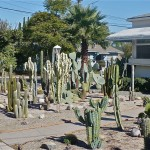 Zbirka kaktusa pred kućom razumnih stanovnika ovog podneblja