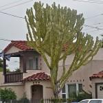 Ako feng shui kaže da kaktus pred vratima štiti od uroka i krađa, ova kuća ne može biti sigurnija