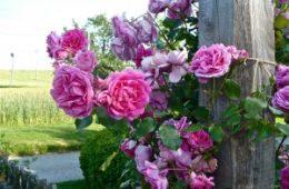 Radionica Parfem iz mog vrta