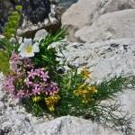 Proljetni otočki buket