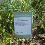Upute za korištenje bilja