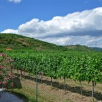 Vinogradi dokle pogled seže