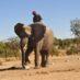 Slonovi imaju najbolji nos!