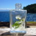 Izložba parfema putuje na Botanicu2018